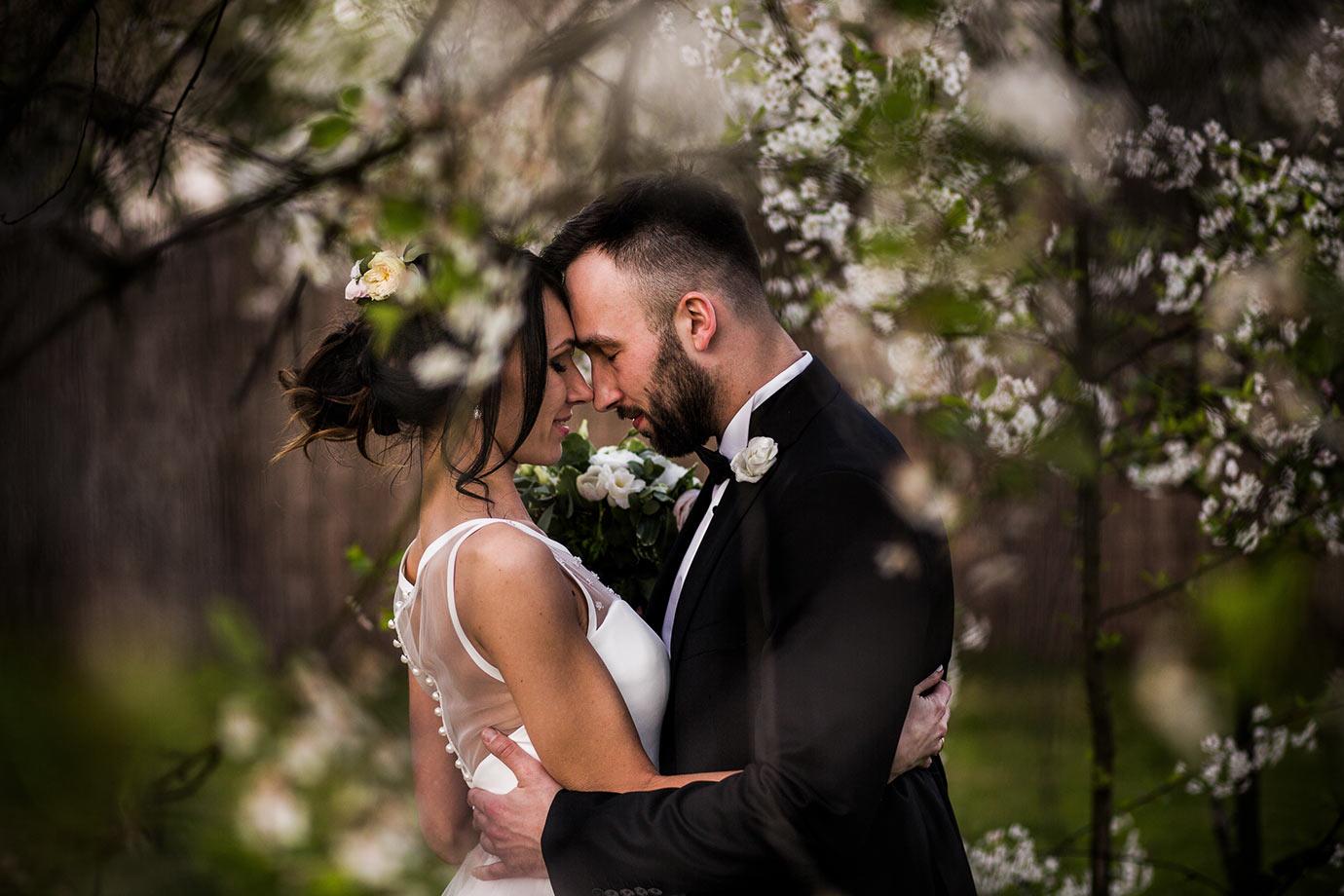 sesja ślubna w kwitnących jabłoniach