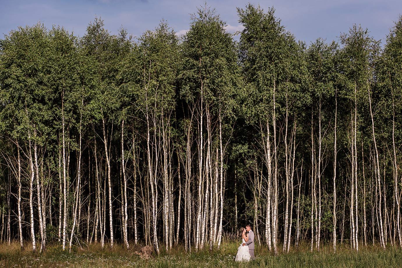sesja ślubna w brzozowym lesie