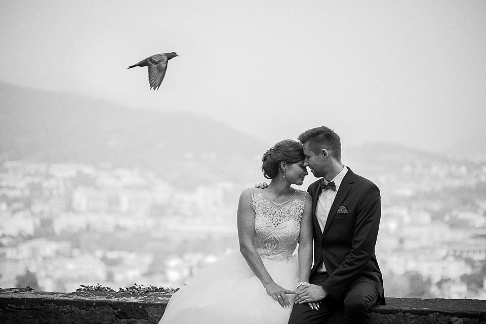 lecący gołąb na zdjęciu ślubnym
