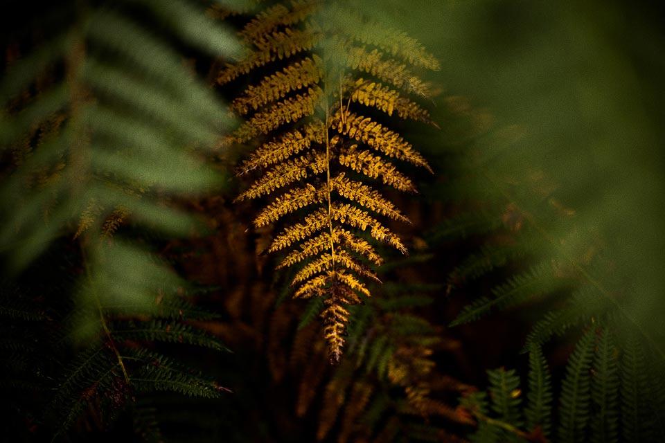 Sesja slubna w naturze