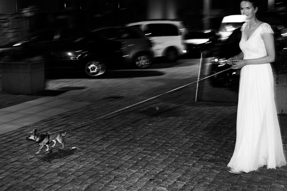 zwierzęta na weselu